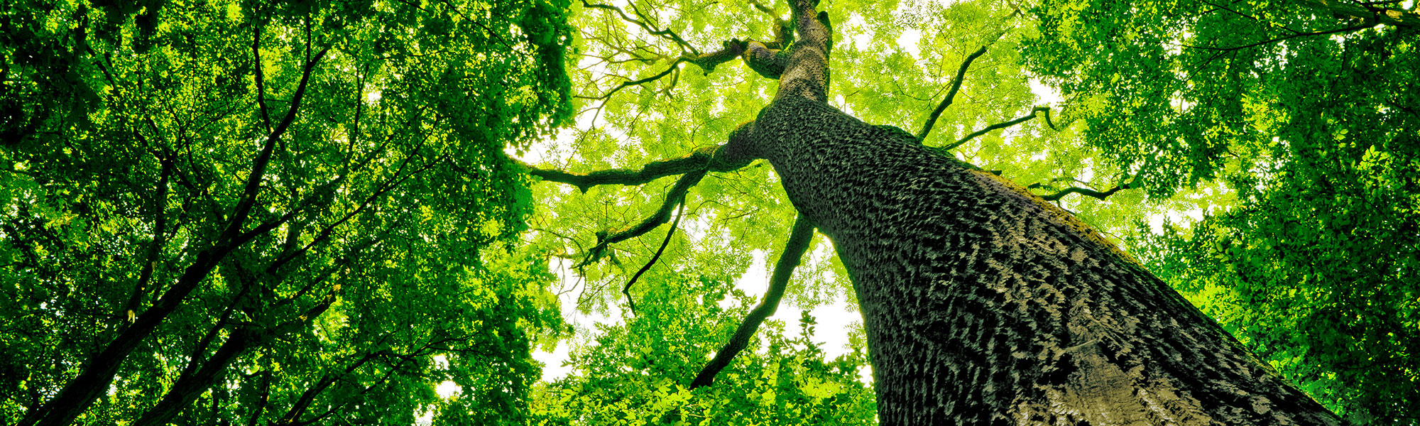 Dying tree evaluations
